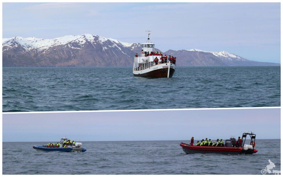 barcos para ver ballenas islandia gentle giants