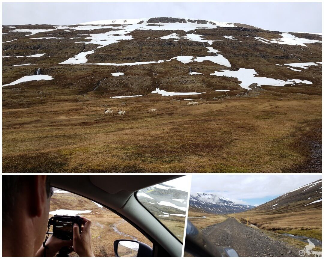 camino a fiordo islandia
