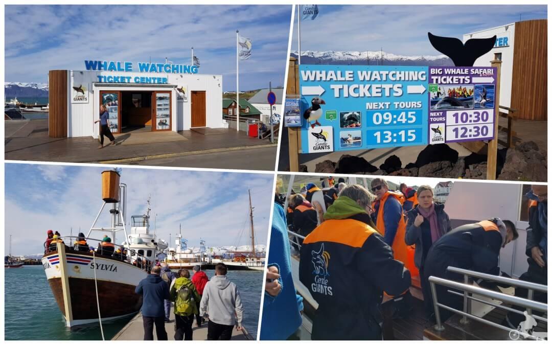 Gentle giants Avistamiento de ballenas en Husavik