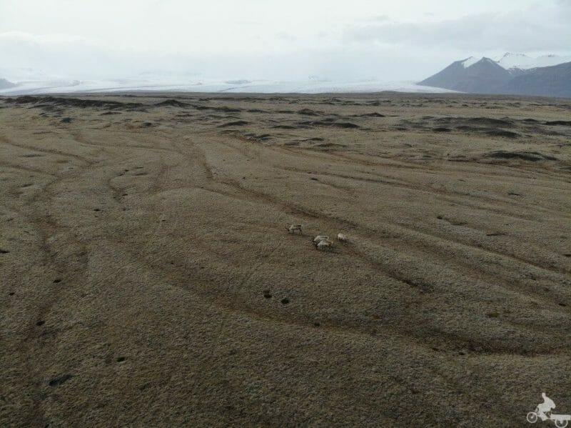 renos glaciar islandia
