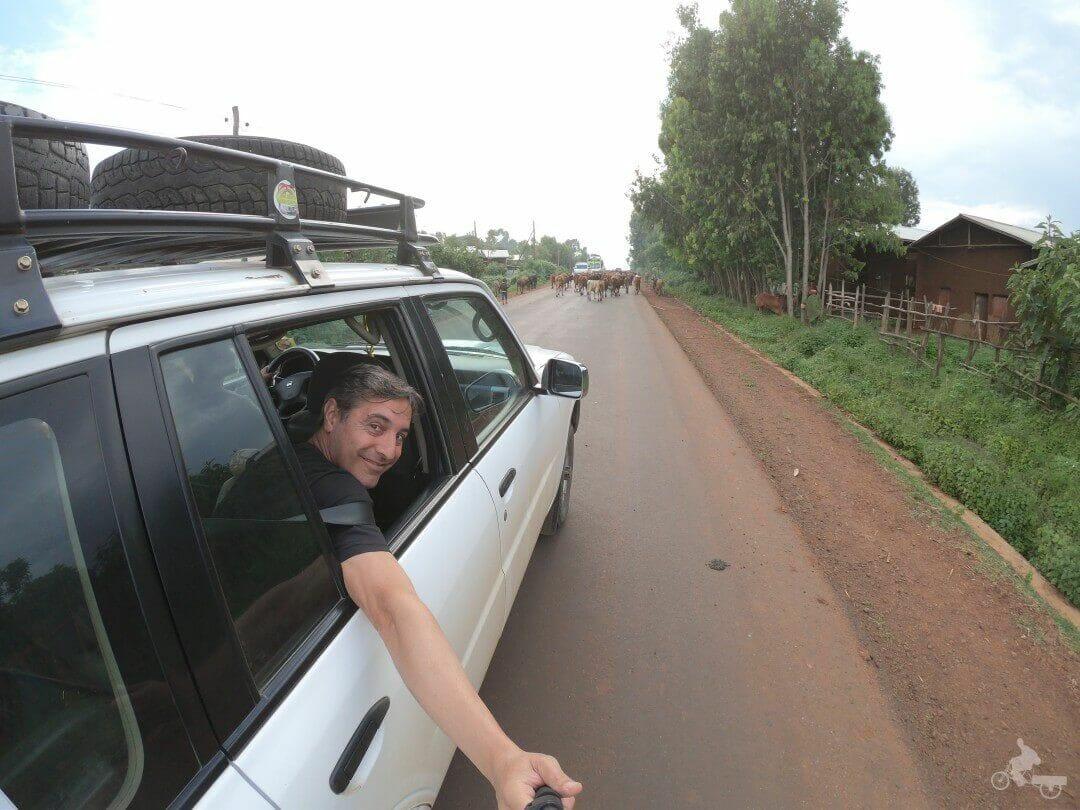 vacas carreteras etiopia