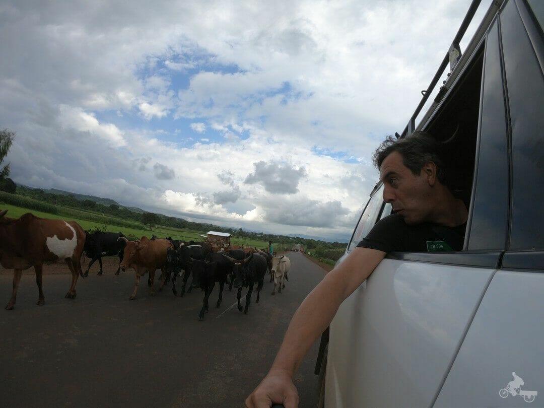 ganado carreteras etiopia
