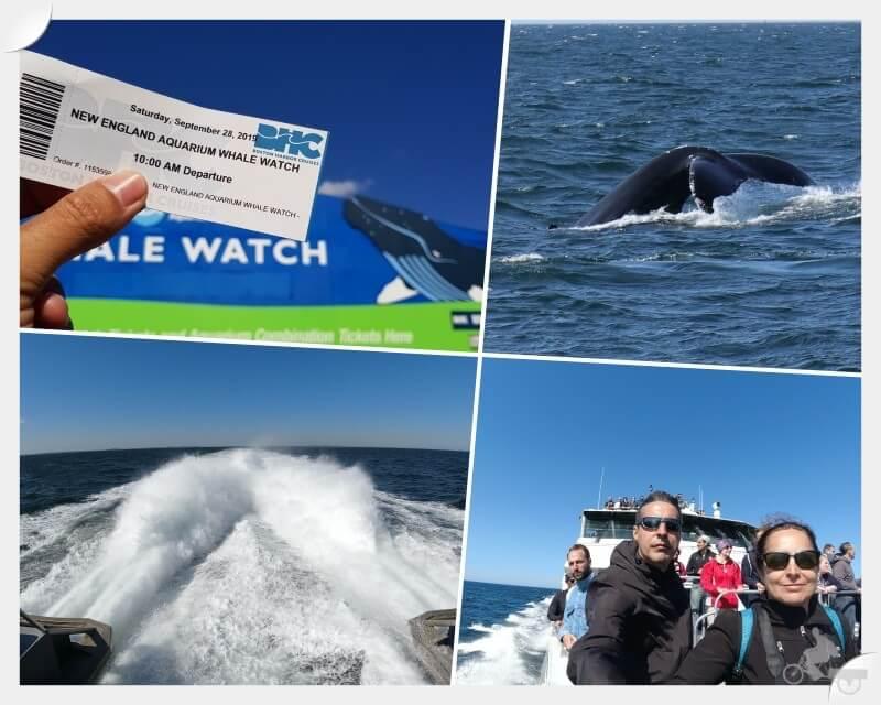 ver ballenas en Boston
