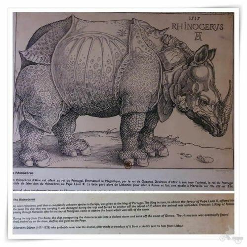 rinoceronte de IF