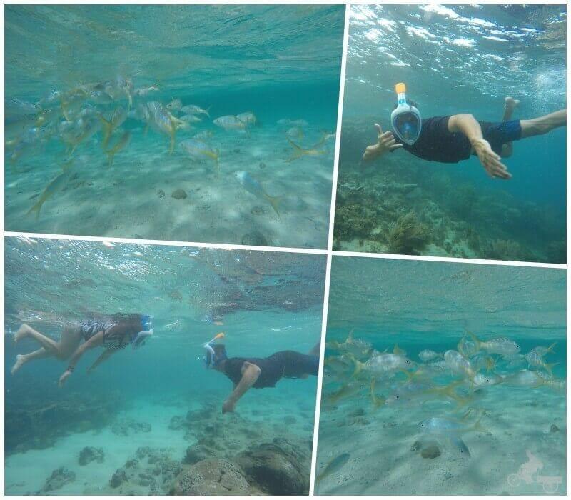 snorkel cayo arena