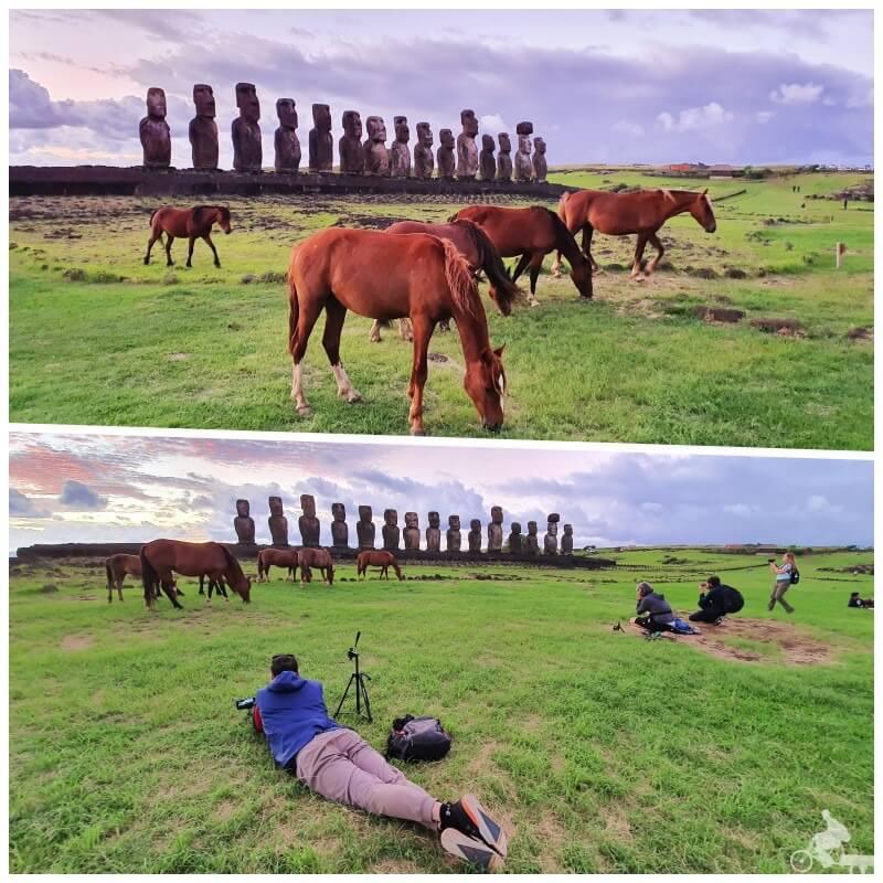 amanecer en ahu Tongariki con caballos