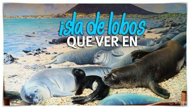 Qué ver en isla de Lobos
