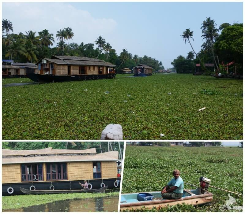 backwaters india sur