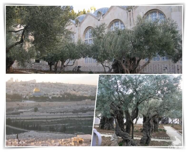 monte olivos e iglesia de Getsemaní