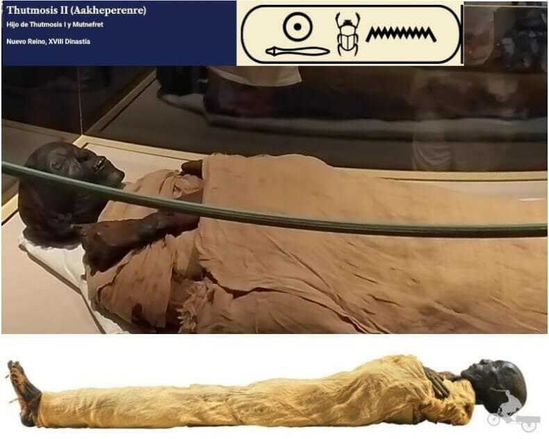 momia de Tutmosis II - momias egipcias reales