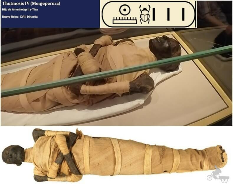 momia de Tutmosis IV