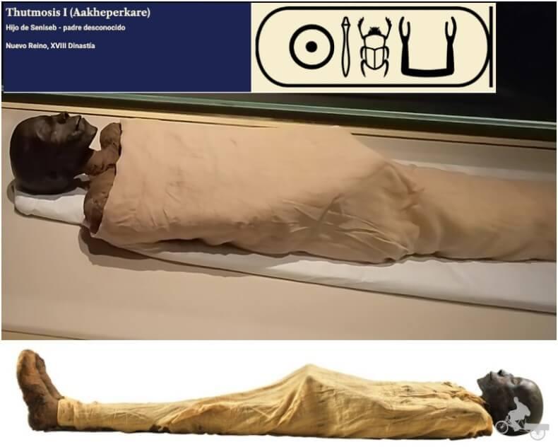 momia de Tutmosis I