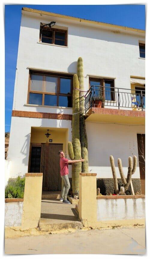 cactus de Valjunquera