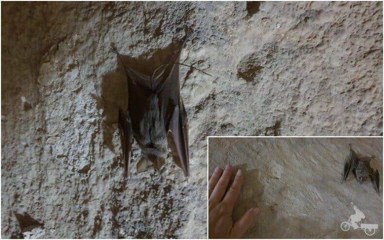 murciélagos en tumbas egipcias